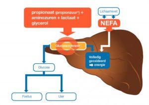 Vetmetabolisme
